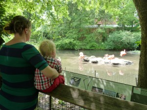 Tate and I checking out an bird he hadn't heard of - Flamingo! He can now pick out a flamingo when ever he sees a picture be it drawn or photographed!