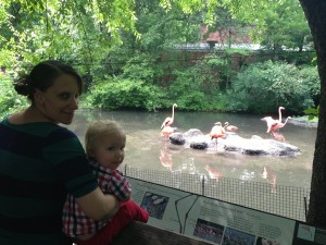The Flamingoes were a really cool orangey colour. I'm not sure the photo does them justice though!