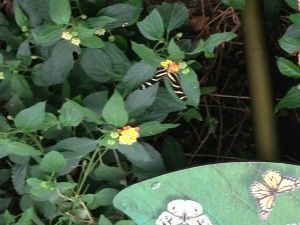 My, not so good, attempt at photographing a butterfly.