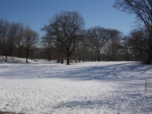 The snow covered park was very pretty.