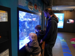Checking out one fish tank.