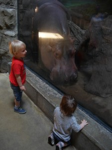 Tate and Knox loved the Hippos!