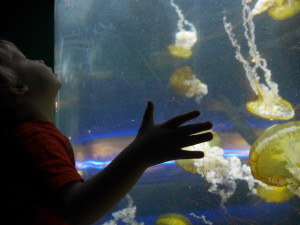 Tate loved the Jellyfish too!